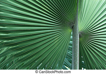 Abstract of palm tree leaf