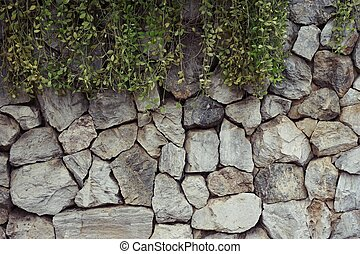 rock wall with Dischidia plant