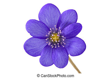 Abstract of the violet flower