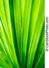 Abstract pattern background of green leaf