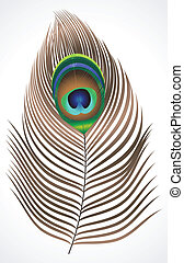 abstract peacock feather  vector illustration