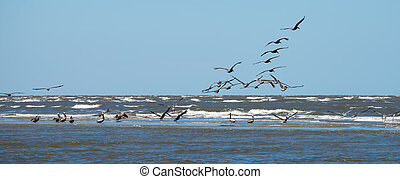 abstract pelicans in flight at the beach of atlantic ocean