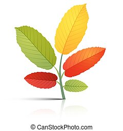 Abstract Plant with Colorful Leaves on White Background