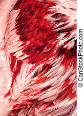 Abstract Red Feathers - Abstract of the feathers of a ...
