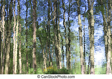 Abstract reflection of forest trees on a river surface