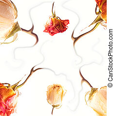Abstract rose frame