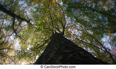 Dizzying, rotating abstract perspective of a treetop against the sky, taken from below in the early morning light. UltraHd 4k video