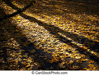 autumn evening in park