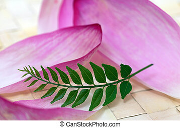 Pink Lotus Petals and Green Curry Leaf