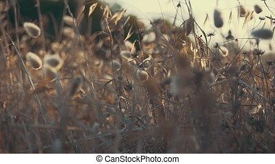 Abstract shots of grass with a shallow depth of field. Shot...