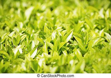 Spring Green Leaves