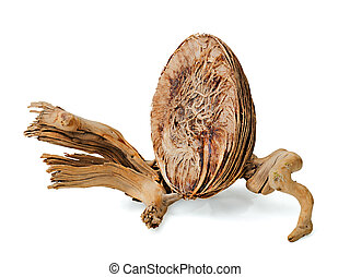abstract still life with dried fruit of a tropical tree and an old piece of wood