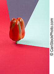 Abstract still life with red sweet pepper on a colored background