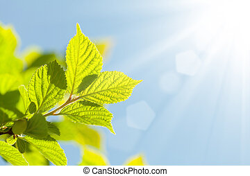 Abstract summer background with green leaves