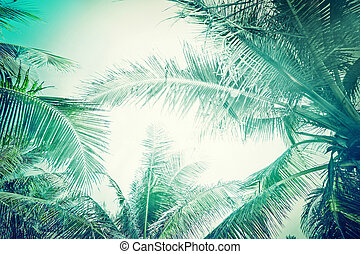 Abstract summer background with tropical palm