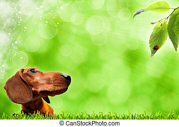 Abstract summer backgrounds with funny dog and defocused bokeh
