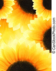 Abstract sunflower background
