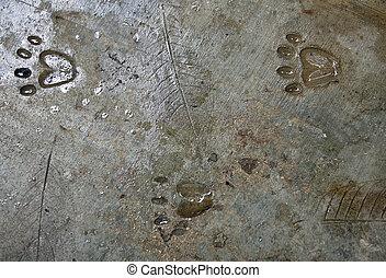 Abstract texture of animal footprint.