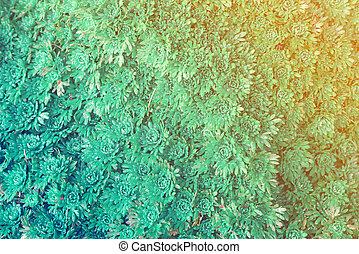 Abstract texture of green flowers with toning effect