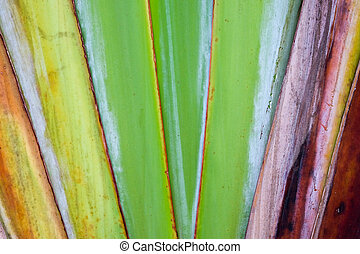 abstract texture pattern detail banana fan background. palm leaf background in nature weave pattern