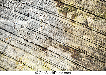 Abstract timber log background