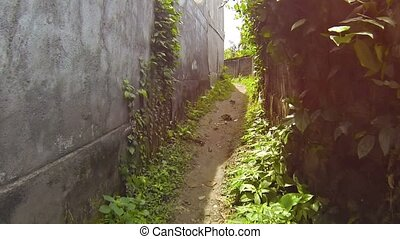 Abstract Timelapse Clip of Passage along a Narrow Rural...