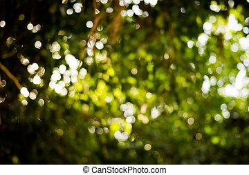 abstract, vaag, bokeh, groene achtergrond