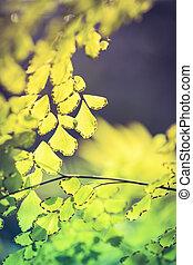 abstract, vaag, natuurlijke , achtergronden, met, groene gebladerte