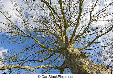 Abstract view of a bare tree in winter