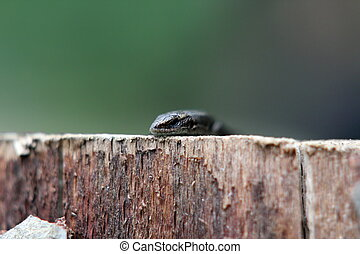 abstract view of a lizard standing on a stump with very...