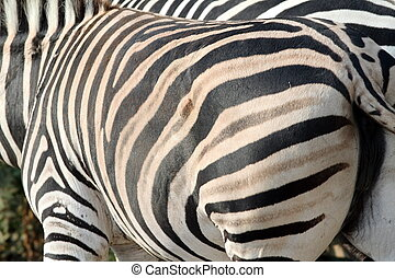 abstract view of a zebra