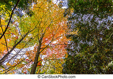 abstract view of colorful fall foliage