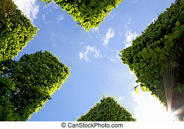 Abstract view of hedge