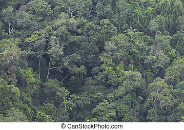 abstract view of tropical forest, Thailand