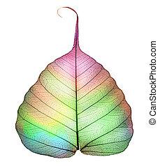 abstract, witte , blad, vrijstaand, kleurrijke