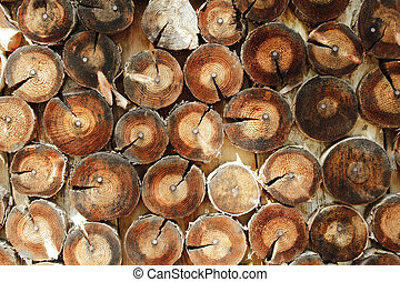 Abstract wood log background close-