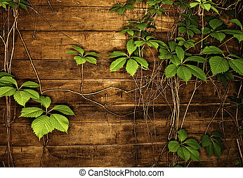 Abstract wooden texture with green leaves