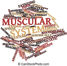 Abstract word cloud for Muscular system with related tags and terms