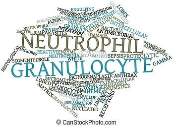 Abstract word cloud for Neutrophil granulocyte with related tags and terms