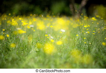 Abstract yellow flowers background with blurred flowers and bokeh