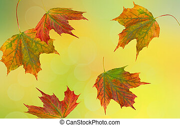 Abstract yellow, green, orange, blue background with blurred spots and autumn abstract falling leaves