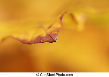 Abstract yellow leaf background in autumn