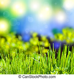 abstract, zomer, achtergrond, met, gras