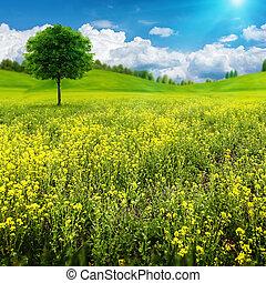 abstract, zomer, natuurlijke , landscape, met, alleen, boompje, op, de, beauty, weide