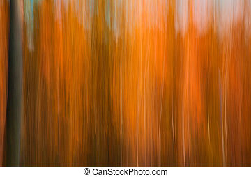 abstraction, automnal, forêt