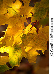 Abstraction of yellow leaves on an autumn day on a blurred background