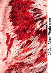abstrakcyjny, czerwone pierze