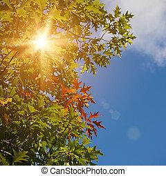 abstrakcyjny, jesienny, tła, dla, twój, projektować