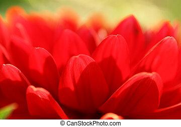 abstrakcyjny, kwiat, tło