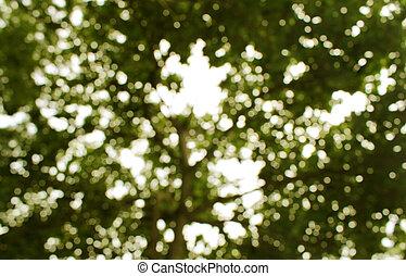 abstrakt, avbild, av, bokeh, blad, med, sunlight., natur, bakgrund
